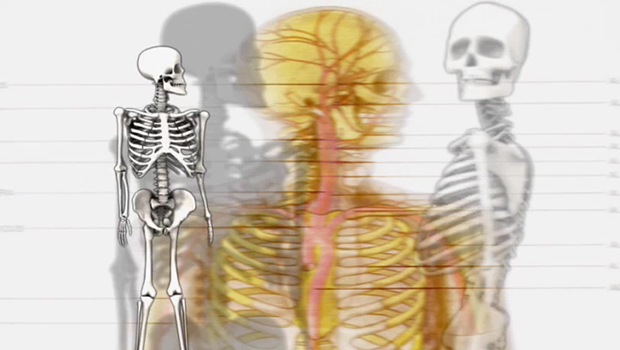 Anatomy Physiology | School of Complementary Therapies | SchoolofCT | Jacqueline Fairbrass | Feeling Absolutely Fabulous
